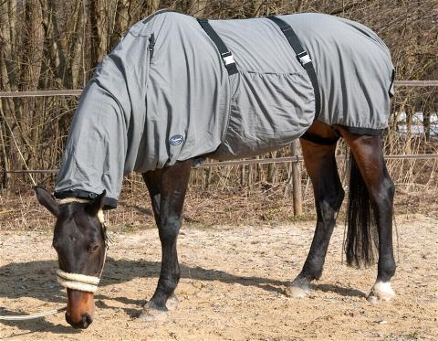 welche ekzemerdecke ist f r mein pferd am besten. Black Bedroom Furniture Sets. Home Design Ideas